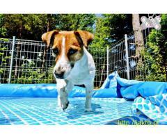 Good Dog Care - hotel dla psów/opiekun zwierząt/wakacje/Warszawa