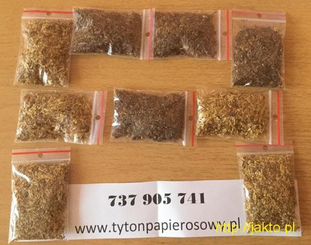 Naturalny tytoń papierosowy - jakość jak ze sklepu! Tytoń Viceroy Korsarz po niskich cenach!