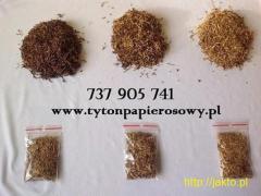 Pozbąd się Problemu Kołków I Śmieci - Czysty Tytoń Za Nieprzyzwoicie Niską Cenę
