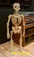 mega puzzle 3D - szkielet człowieka